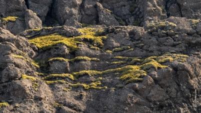 Moose auf porrösem Vulkangestein