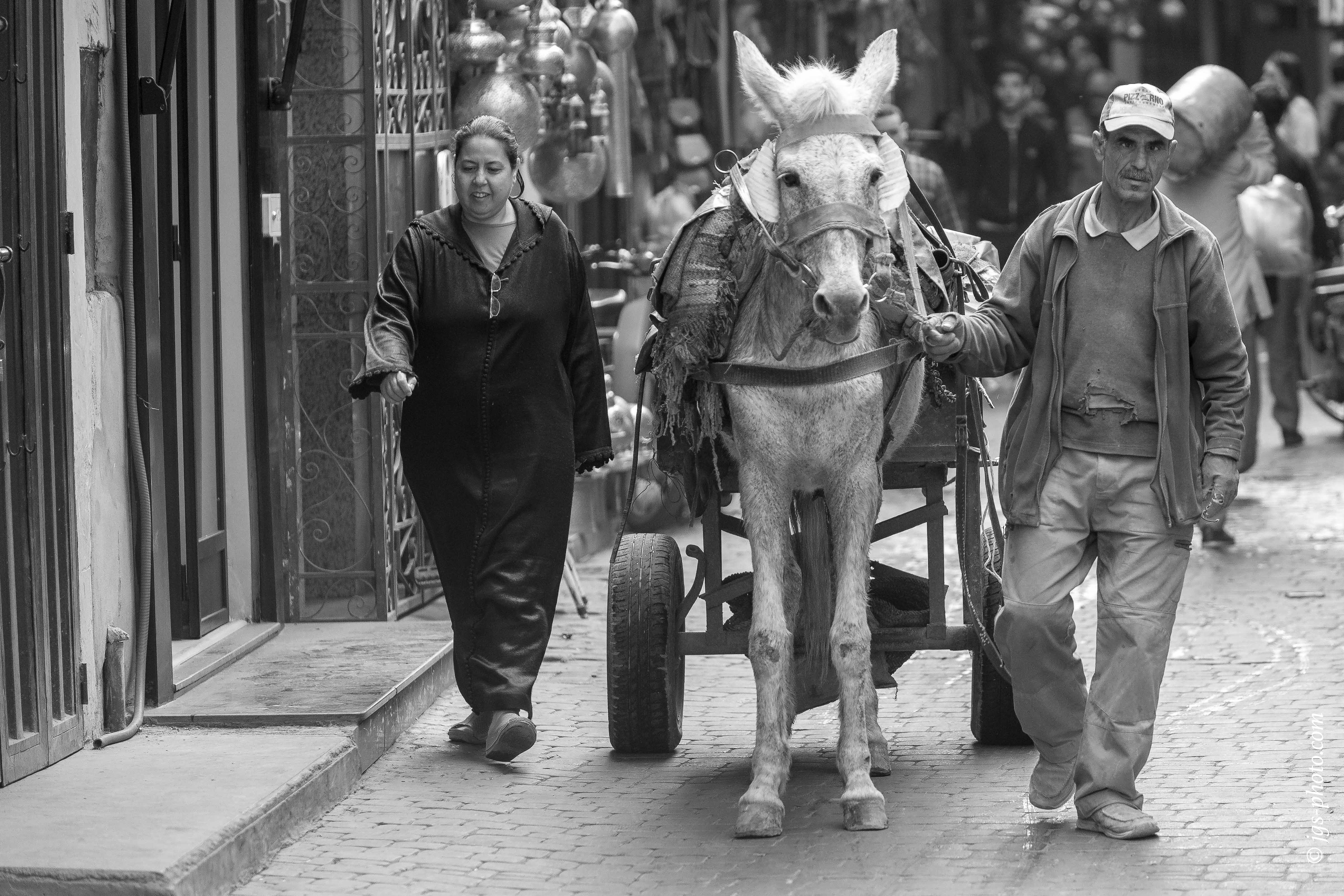 Maultiere sind in der Altstadt das flexibelste Transportmittel